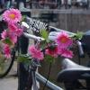 Guidon fleuri