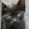 Le chaton noir