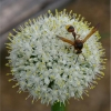 Insectes butineurs (1)