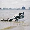 Les crocs de la mer