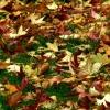 Couleurs d'automne (6)