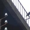 Cris d'oiseaux