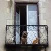 Entre chien et chats