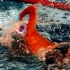 Championnats interrégionaux de natation à...