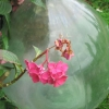 Le vase d'Ariaga