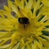 Le plein de pollen