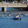 Ouverture de la saison natation 2012-2013:...