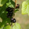 Fruits de saison (1)