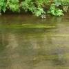 Impression de la rivière