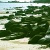 Marche des rochers vers la mer