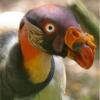 Étranges oiseaux (1)