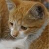 Le chaton roux