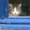 Chat à la fenêtre bleue