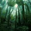 Forêt de laminaires