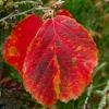 Couleurs d'automne (5)